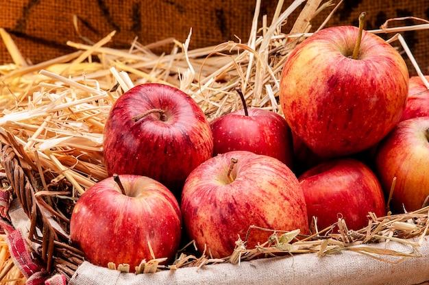 Cesta de deliciosas maçãs típicas da região do vulcão etna, na sicília