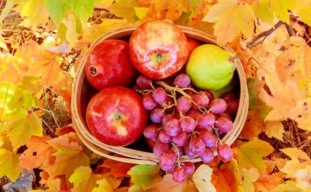 Cesta de maçãs e uvas na grama verde