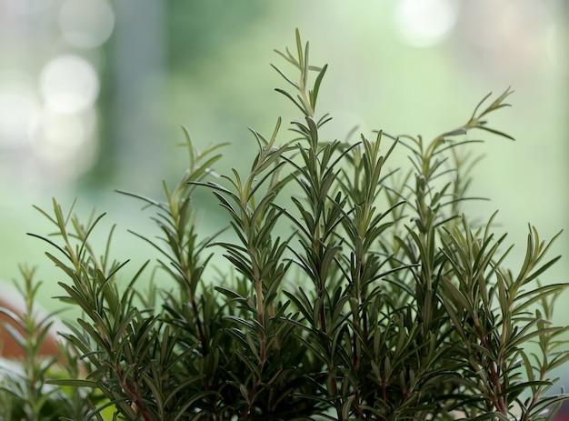 Cesta de piquenique, ervas