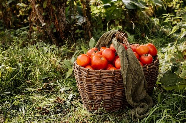 Cesta de tomates vermelhos na grama.