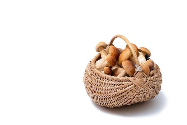 Cesta de vime cheia de boletus edulis isolada no fundo branco. cesta de cogumelos comestíveis com espaço para texto. ninguém