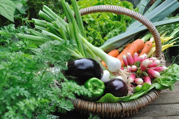 Cesto de legumes