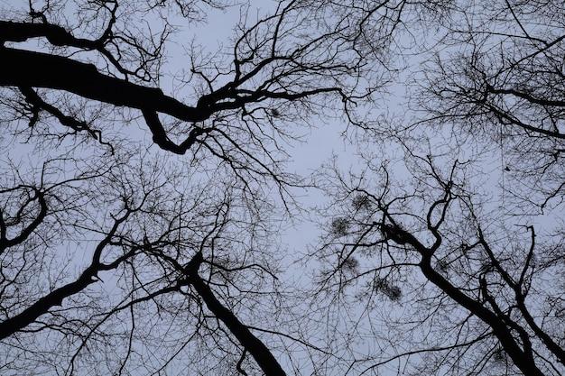Céu assustador em uma floresta de árvores sem folhas