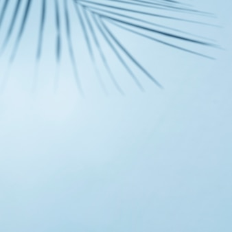 Céu azul claro com galho de folha