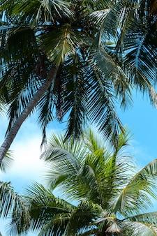 Céu azul com algumas nuvens e palmeiras