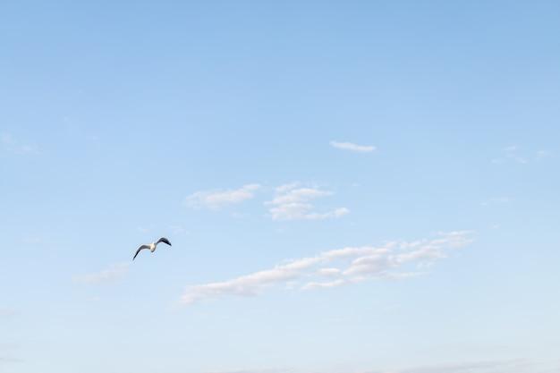 Céu azul com nuvens e pássaros