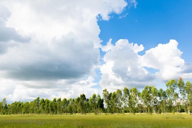 Céu azul e nuvem bonita com árvore do prado.