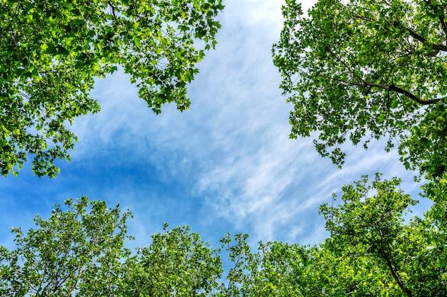 Céu azul emoldurado por galhos de árvores floridas