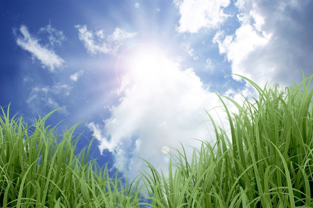 Céu azul ensolarado e grama