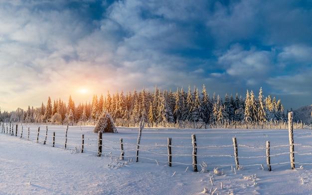 Céu azul fantástico e árvores cobertas de neve