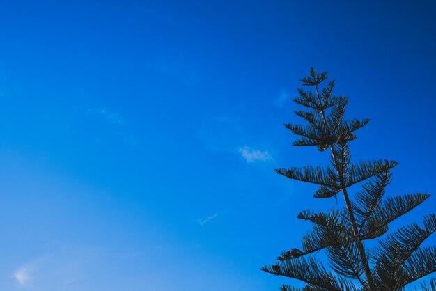 Céu azul intenso com uma árvore de abeto, espaço da cópia.