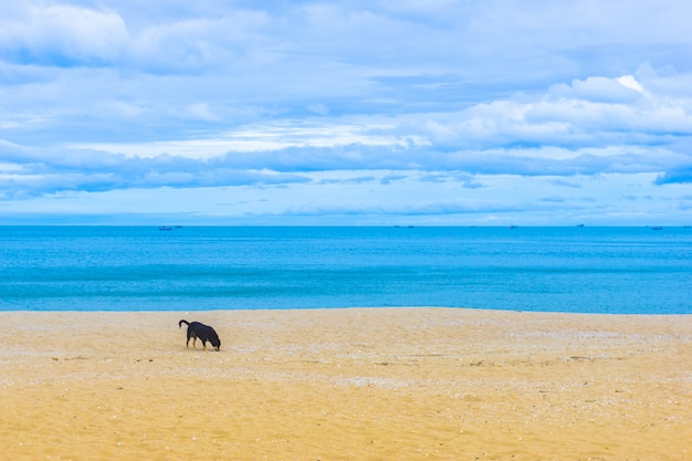 Céu azul nublado e mar com praia de areia dourada.