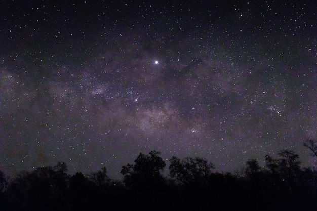 Céu cheio de estrelas e silhuetas de árvores abaixo