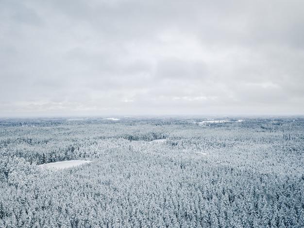 Céu cinza sobre floresta coberta de neve no inverno - foto aérea