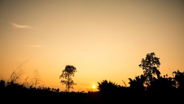 Céu claro com luz dourada do efeito do nascer do sol e campo na frente da cena, belo exterior natural para o fundo do vintage