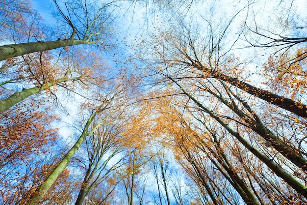 Céu com nuvens através dos galhos das árvores no outono (de baixo)