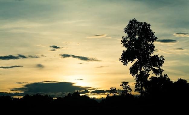 Céu crepusculo e nuvem chuvosa com árvore. alto nível de ruído. céu noturno com nuvem.