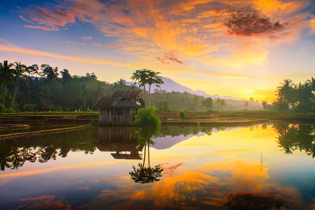 Céu da manhã em campos de arroz no norte bengkulu indonésia