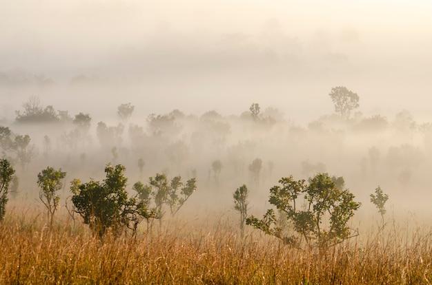 Céu da manhã na floresta do parque nacional com fundo borrado