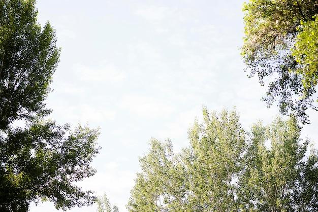 Céu de baixo ângulo com árvores