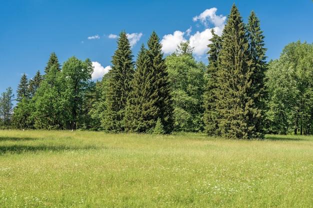 Céu de pastagem e fundo de grama em um parque. campo verde com flores brancas e amarelas ao ar livre na natureza no verão. campo de verão verde brilhante durante o dia. céu de prados e parque de grama