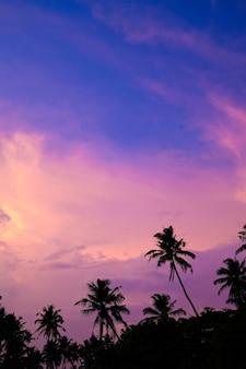 Céu do sol brilhante nos trópicos silhuetas de palmeiras contra um céu roxo rosa