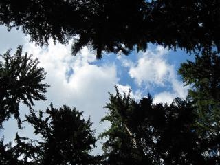 Céu e das nuvens através de copas de árvores
