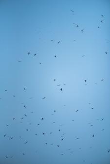 Céu e falcão
