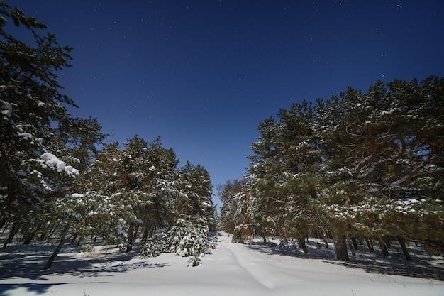 Céu estrelado acima da floresta de pinheiros. fotografado em uma noite de inverno em lua cheia.