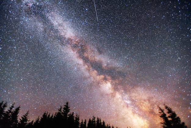 Céu estrelado através das árvores