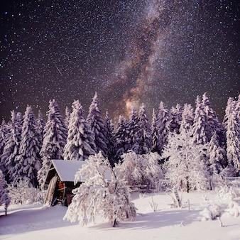Céu estrelado e uma árvore no gelo na bela