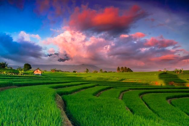 Céu incrível em campos de arroz na indonésia