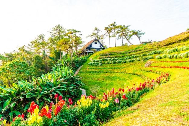 Céu lindo nascer do sol com jardim na montanha no parque nacional huai nam dang