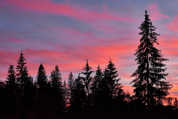 Céu majestoso, nuvem rosa contra as silhuetas dos pinheiros na hora do crepúsculo.