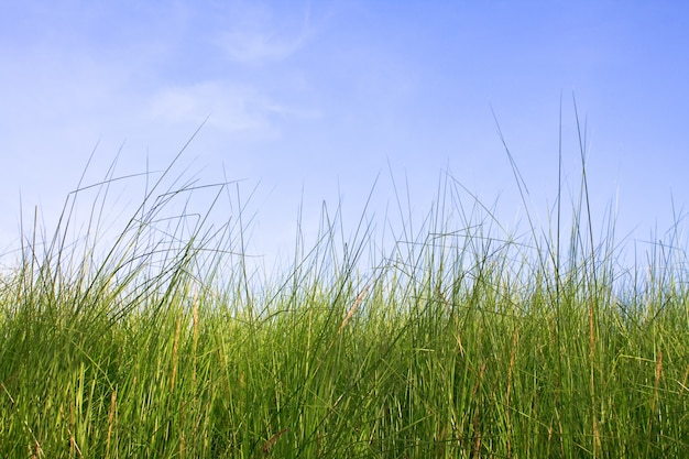 Céu netherlands duna idílica paisagem