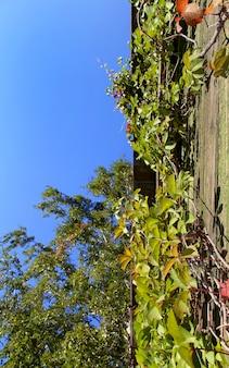 Céu no jardim