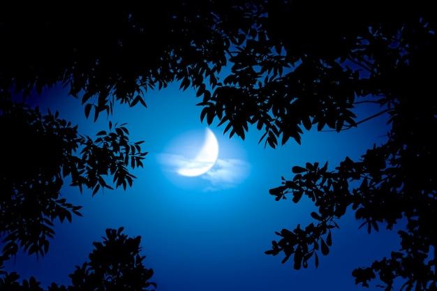 Céu noturno com lua crescente e copas de árvores
