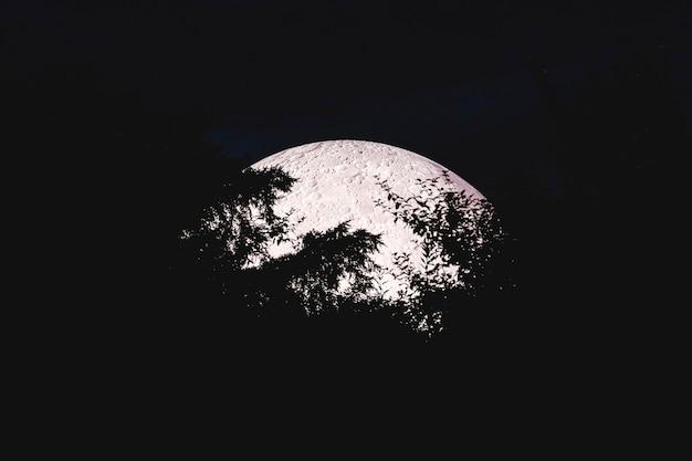 Céu noturno e lua cheia. lua cheia atrás de galhos de árvores. noite mística de mistério.