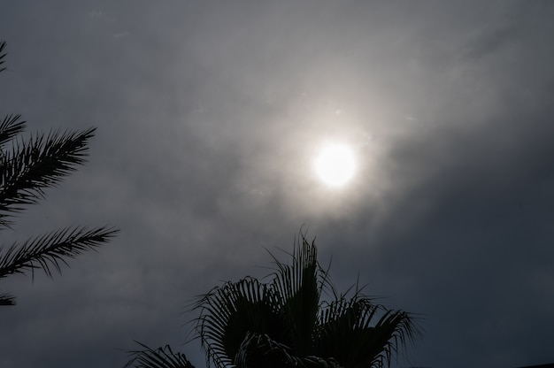 Céu nublado de férias. céu escuro com palmeiras.