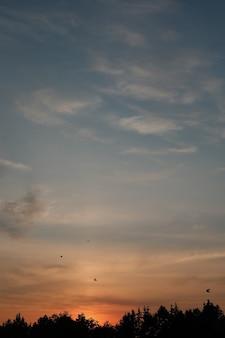 Céu panorâmico ao pôr do sol com silhuetas de pássaros voando
