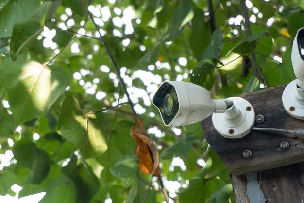 Cftv branco instalado na árvore que remete à harmonia entre tecnologia e natureza. cctv escondido na árvore para detectar ladrão