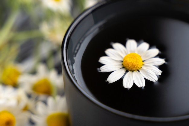 Chá de camomila e camomilas em xícara de cerâmica cinza na mesa de cimento preto. chá de ervas. vista do topo. postura plana