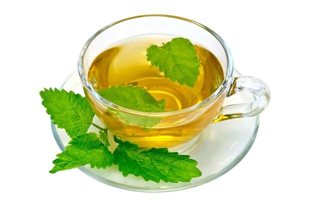 Chá de ervas em uma xícara de vidro e pires, um raminho de urtiga isolado