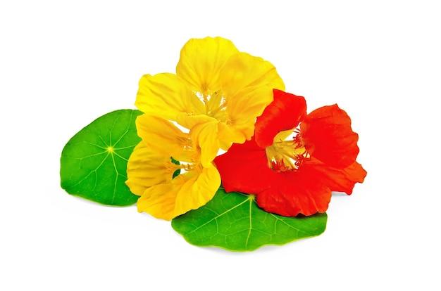Chagas amarelas e vermelhas com folhas verdes isoladas no fundo branco