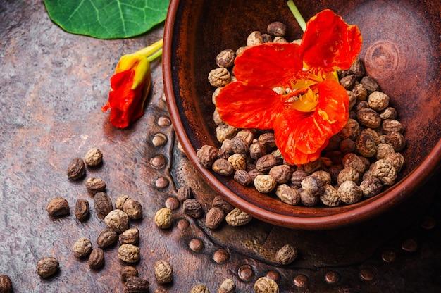 Chagas officinale com sementes