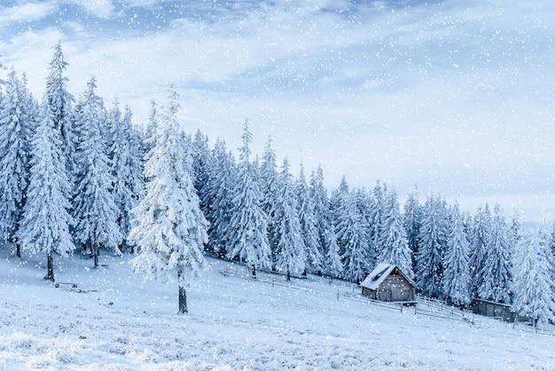 Chalé nas montanhas. cárpatos, ucrânia, europa. bokeh ligh