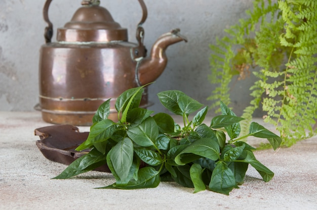 Chaleira de cobre velha e plantas verdes