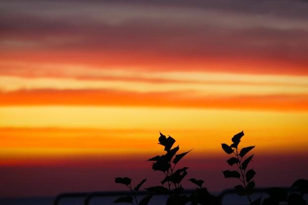 Chama vermelho laranja amarelo céu e feliz ano novo texto no pôr do sol volta silhueta planta
