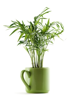Chamaedorea planta em copo verde sobre branco