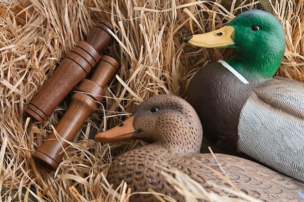 Chamariz e chamadas de pato